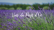 Pays d'Oc wines: bright and solar