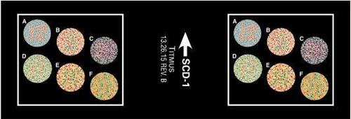 SCD-1  Slide, Color Ishihara