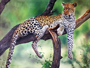 LEOPARD BY RON BALABAN