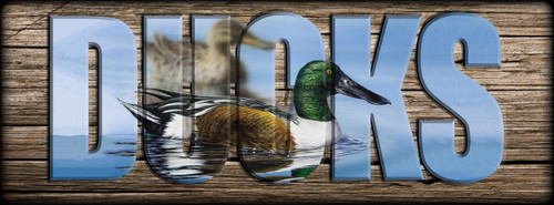 DUCKS -  Northern Shoveler - Miniature Shelf Sign