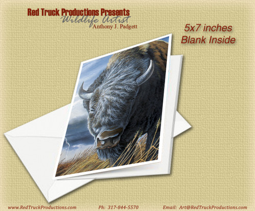 "5x7 Notecard- ""American Bison"""