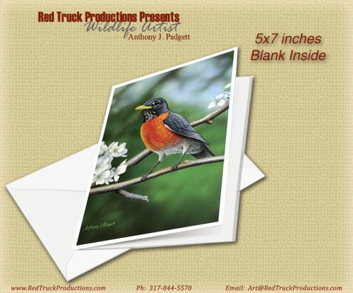 "5x7 Notecard- ""American Robin"""