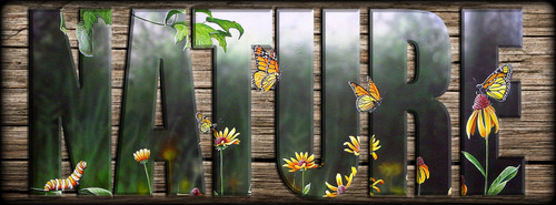 NATURE Sign - Flight of the Monarch Butterfly