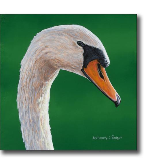 Small Canvas Print - Swan Closeup