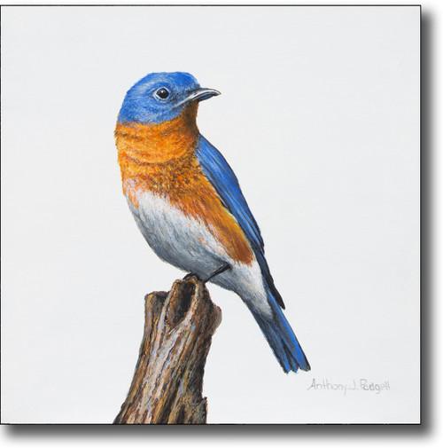 Small Canvas Print - Bluebird