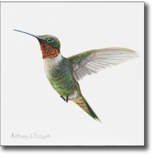 Small Canvas Print - Hummingbird