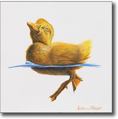 """Small Canvas Print - """"First Dip"""" - Duckling"""