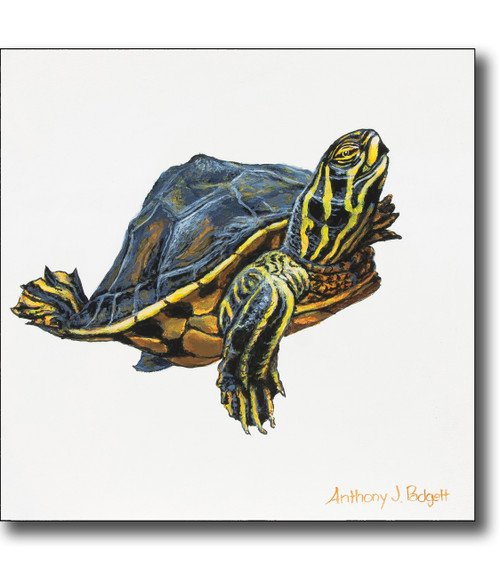 Small Canvas Print - Turtle