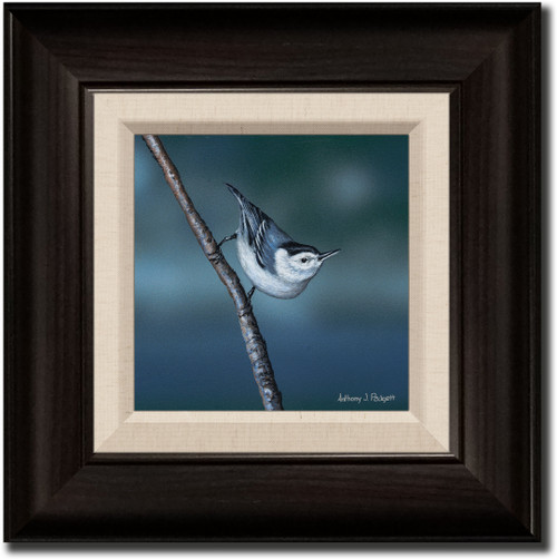Small Canvas Print - Nuthatch