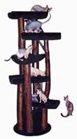 Cat Tree with Various Levels