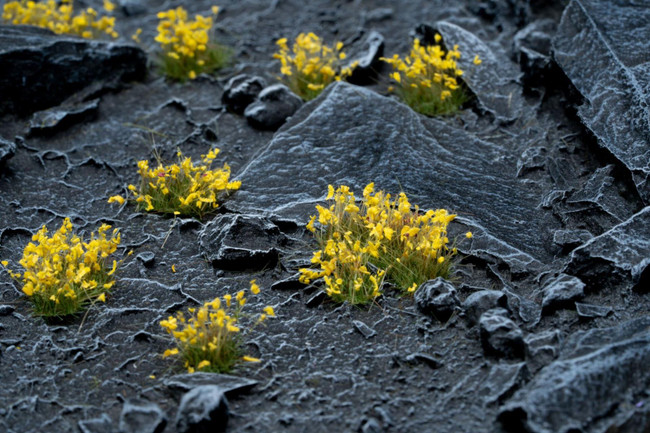 Yellow Flowers, Tufts