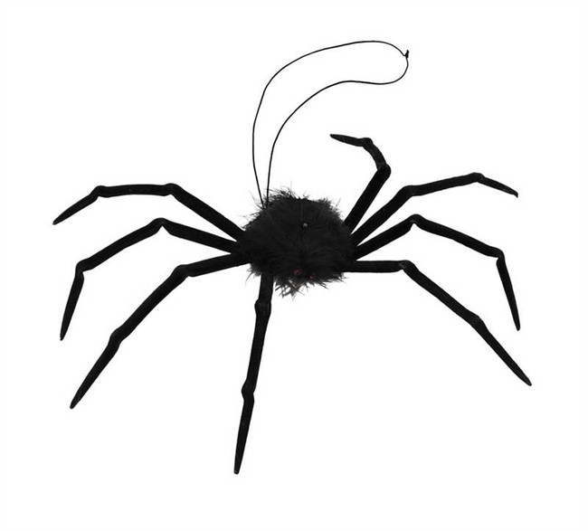 Spider. Fur Tarantula.