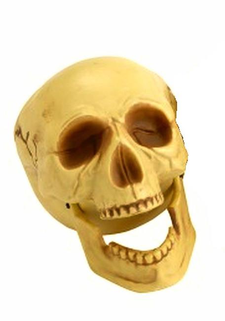 Skeleton Skull Head, Moveable Jaw, 16cm Tall