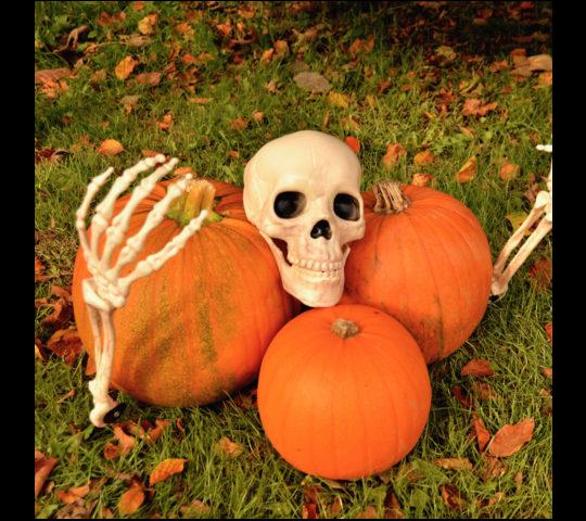 pumpkintrail.png