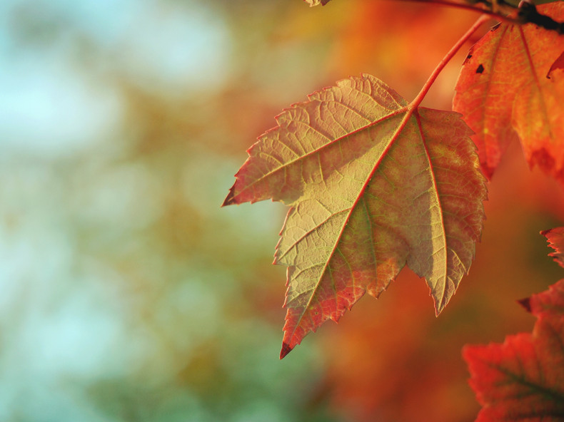 Maintaining Your Ductless Mini Split for Fall