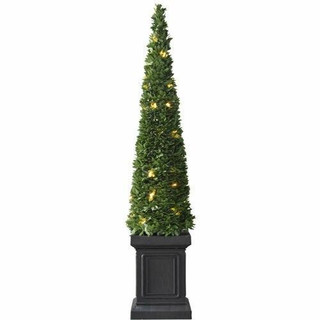 Fraser Hill Farm 40 Boxwood Topiary Cone with Square Pot and Clear LED Lights