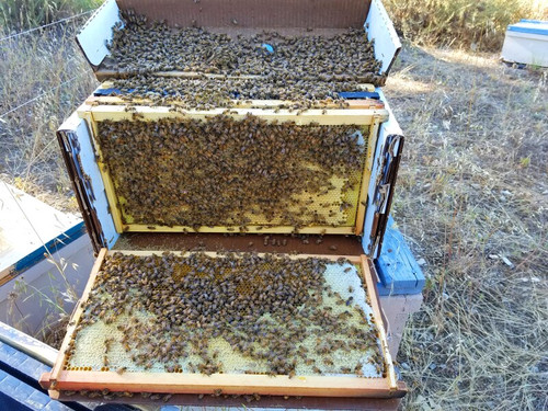 4-Frame Nuc - Live Bees - SPRING 2021