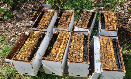 4-Frame Nuc - Live Bees - MID SPRING 2021