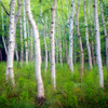 Acadia Birch 126 Piece Small Wooden Jigsaw Puzzle | Zen Puzzles