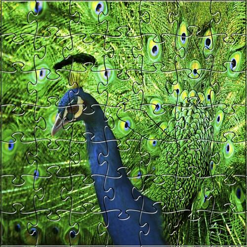 Peacock 50 Piece Teaser Size Wooden Jigsaw Puzzle | Zen Puzzles