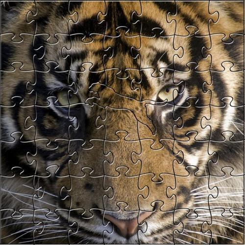Amur Tiger 53 Piece Teaser Size Wooden Jigsaw Puzzle | Zen Puzzles