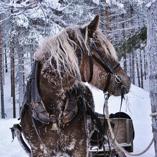 Winter Horse 300 Piece Large Wooden Jigsaw Puzzle | Zen Puzzles