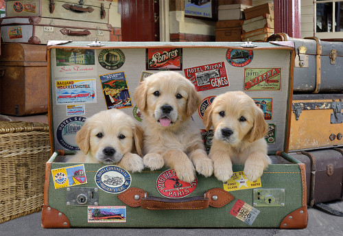 Puppies in a Suitcase 500 Piece Jigsaw Puzzle | Educa
