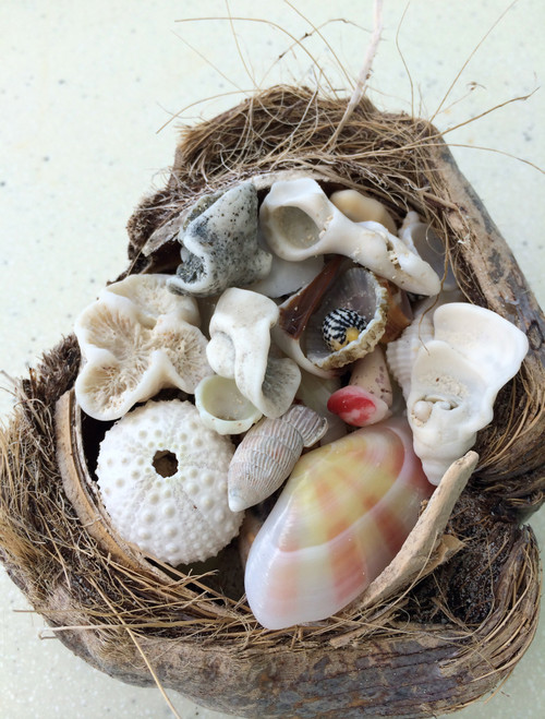 """Seashell Treasures"" 223 Large-Piece *Whimsical Cut* Wooden Jigsaw Puzzle 