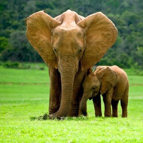 """Elephants"" 50 Piece Teaser Wooden Jigsaw Puzzle | Zen Puzzles"