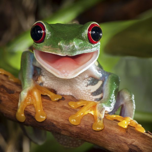 """Happy Tree Frog"" 50 Piece Teaser Wooden Jigsaw Puzzle 