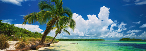 """Paradise Palm"" 2000 Piece *Panorama* Jigsaw Puzzle | Heye"