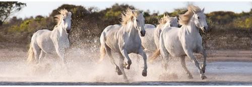 """Running Horses"" 1000 Piece *Panorama* Jigsaw Puzzle | Clementoni"