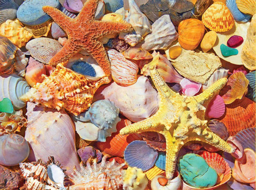 """Beach Shells"" 550 Piece Jigsaw Puzzle 