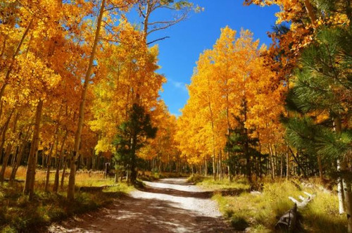 """Fall in Northern Arizona"" 350 Piece ""Standard Cut"" Wooden Jigsaw Puzzle 