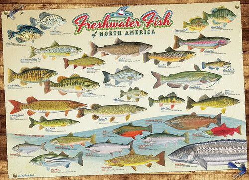 """""""Freshwater Fish of North America"""" 1000 Piece Jigsaw Puzzle 