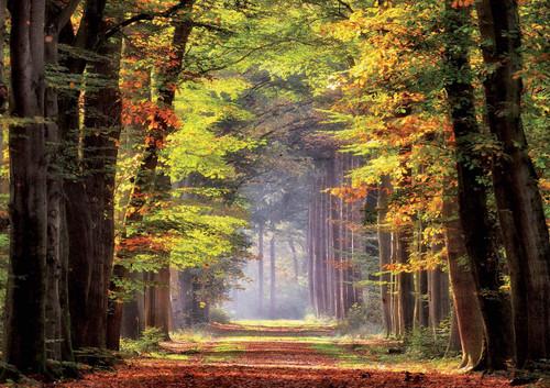 """Autumn Walk"" 1000 Piece Jigsaw Puzzle   Educa"