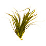 Whiting Farms Schlappen Bundle Grizzly Fluorescent Yellow Chartreuse Image 1