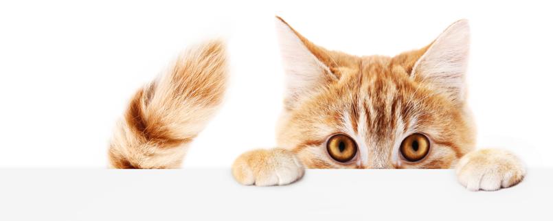 peeking-kitty.png