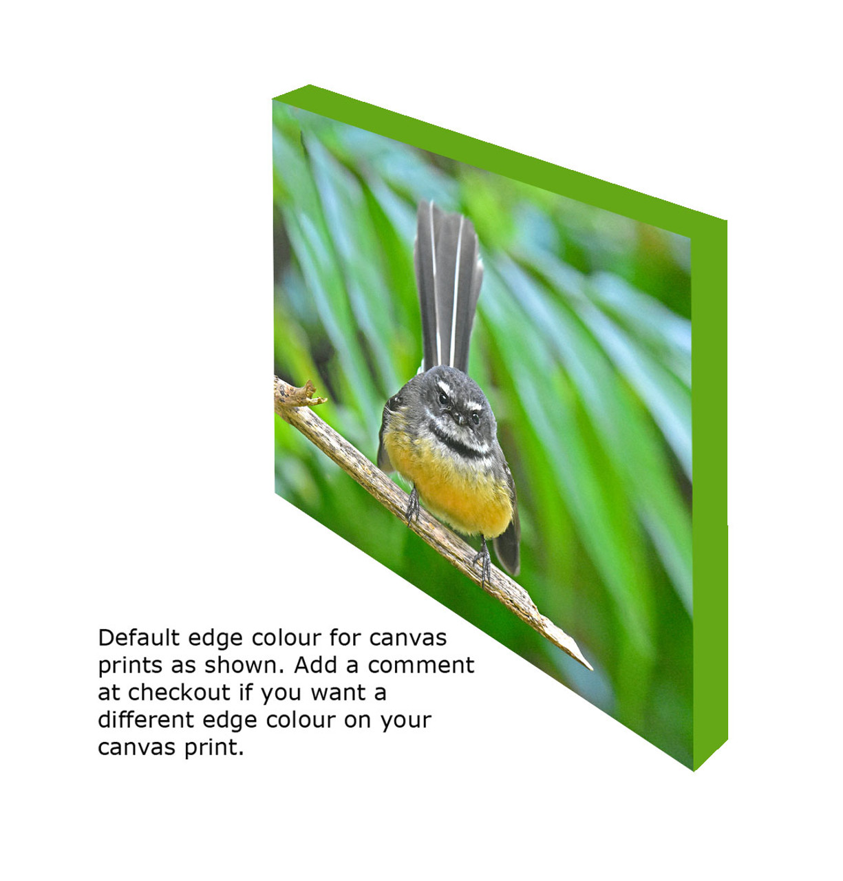 374ec00141c Fantail (P wakawaka)  Canvas print showing default edge colour ...