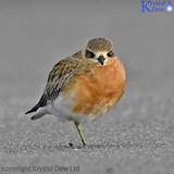 Shore Birds At Sandy Bay