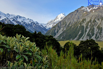 Aoraki Mt Cook From Governers Bush
