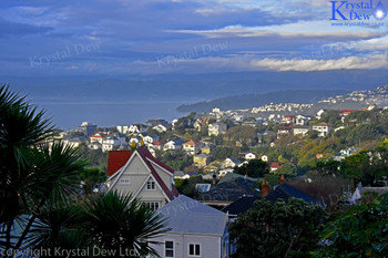 Wellington City From Kelburn