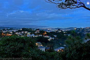 Wellington City At  Dusk