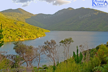 Endeavour Inlet From Punga Lodge