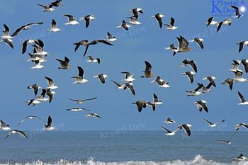A Filght Of Gulls