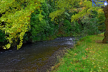 Te Henui River In Autumn