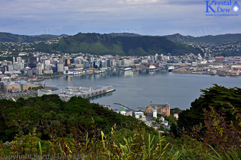 Wellington From Mt Victoria