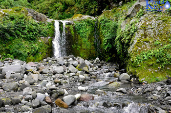 Egmont National Park, Taranaki, bush, curtis falls, gorge, manganui river, waterfall