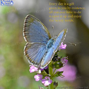 The Gift, Common blue butterfly on thyme