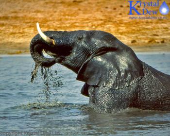 Elephant In Waterhole